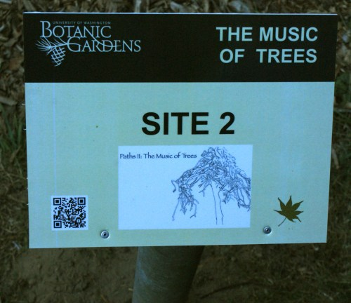 washington park arboretum, music of trees, art in nature