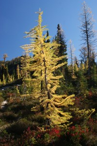 fall colors, north cascades, hiking, heather pass