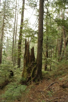 kids in nature, old growth forest, lake 22 trail