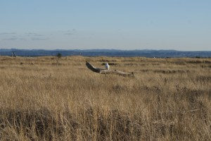 damon point, birding washington, snowy owl