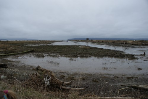 fir island, skagit flats, bird watching