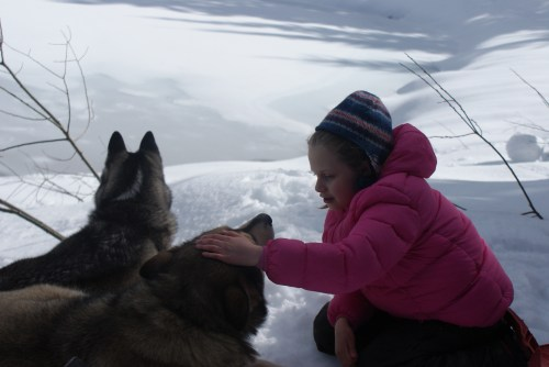 kids and dogs, gold creek, snowshoeing with children,