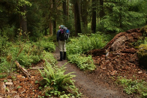 hoh valley, old growth forest, one square inch, hiker on trail