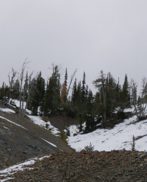 longs pass, hikes with children, fall colors