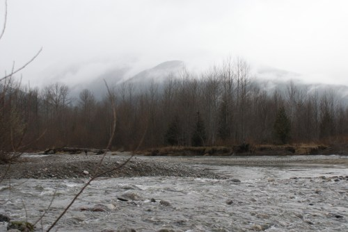 skagit river, salmon, eagles