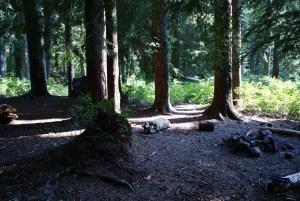 cold creek trail, backpacking kids western washington
