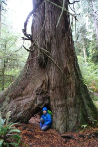 south whidbey state park, wilbert trail, huge cedar, fall hikes for kids