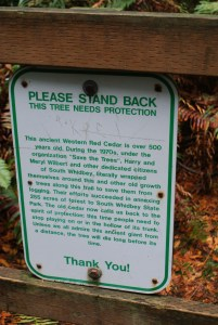 south whidbey state park, fall hiking, best hikes for kids, big old trees
