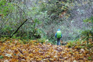south whidbey state park, beach trail, hikes for kids, fall hiking