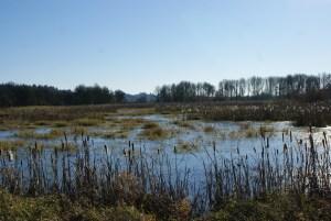 birding ridgefield national wildlife sanctuary, auto tour