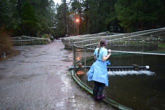 hiking with children, winter hikes, bellingham,