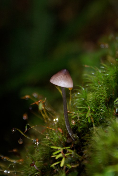 fungi washington, shadow of the sentinels, best hikes for children