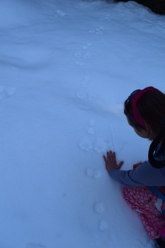 snowshoe hare tracks, snowshoeing blewett pass, snowshoeing with children, winter hiking