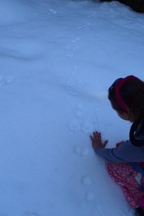 snowshoe hare tracks, snowshoeing blewett pass, snowshoeing with children, winter hiking