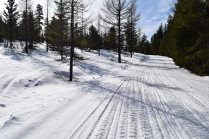 swauk forest, snowshoeing, blewett pass, winter hikes for kids