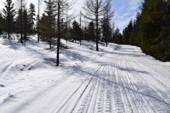 swauk forest, snowshoeing, blewett pass, winter hikes for kids