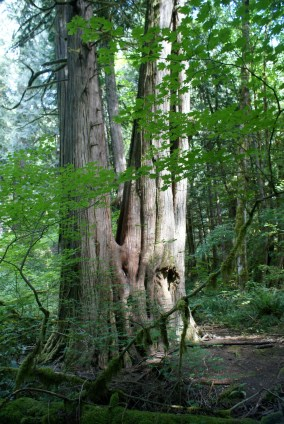 newhalem area trails, hiking with children, old growth forest