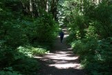 llandover woods greenspace, hiking with children, seattle urban hikes
