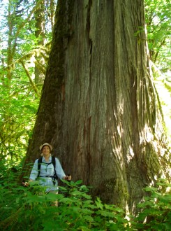 Rockport State Park, old growth hiking, hikes for children