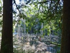 hikes for children, family nature hikes, bellingham