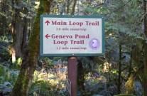 stimpson family nature reserve, hiking for children, family nature hikes, bellingham