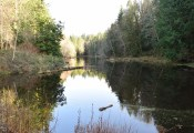stimpson family nature reserve, hikes for children, family nature hikes, bellingham