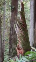 stimpson family nature reserve, hikes for kids easy nature walks, bellingham