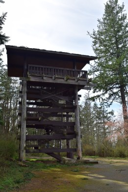 sehome hill arboretum, hiking with children, best hikes for kids, spring, nature walk, bellingham