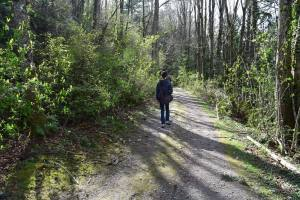 sehome hill arboretum, hiking with children. spring, bellingham walks