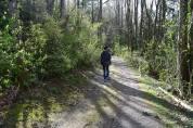 sehome hill arboretum, hiking with children. spring, bellingham walks