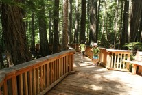 hikes for kids, north cascades, forest, summer