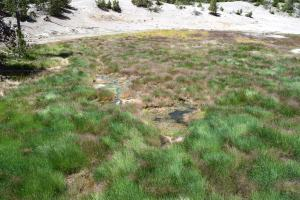 norris, back basin, yellowstone, trail, hiking for kids