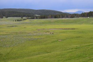 yellowstone, hayden valley, bison, wildlife, thunderstorm