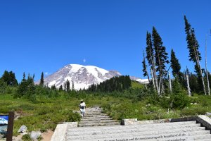 mount rainier national park, paradise trails