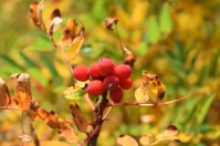 chain lakes trail, mt. baker, fall colors, best hikes for kids