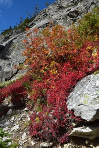 heather maple pass trail, best hikes for kids, north cascades, fall colors