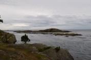 lopez island, san juans, birding, native wildlife, marine sanctuary