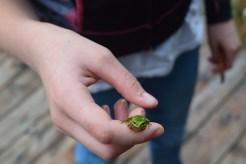 tree frog, kids in nature, born wild, big rock park, sammamish