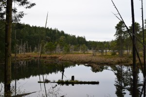 little cranberry lake, anacortes community forest lands, winter hiking, best hikes for kids,