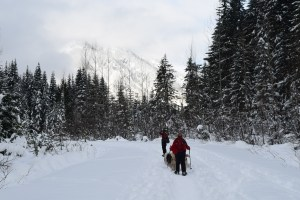 snowshoe, winter hike, gold creek, kids in nature, dogs snowshoeing