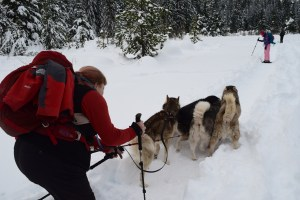 winter snowshoe, gold creek, dogs on the trail,