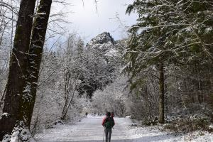 rattlesnake ledge trail, north bend, cedar river watershed, winter hikes, beat hikes for kids,