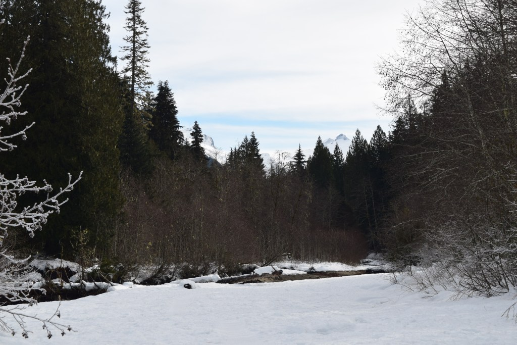 nooksack river, salmon ridge sno-park, winter hikes for kids,