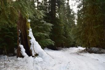 winter snowshoe trips, family friendly snowshoe, nooksack river, salmon ridge sno-park