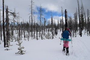 snowshoeing, ray benson sno-park, hoodoo, north loop trail, winter, central oregon