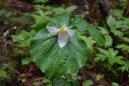 lake padden trail, nature, spring wildflowers, washington, bellingham, hiking with kids