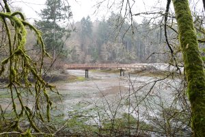 tolmie state park, hikes for kids, spring, beach tide's out, forest, olympia
