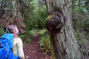 heart lake trail, anacortes community forest lands, winter hiking, hikes for kids, acfl