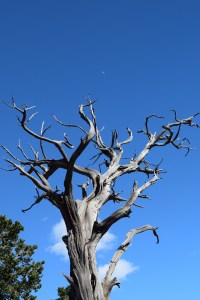 grand canyon national park, spring break, south rim, nature, tree, moon, photography