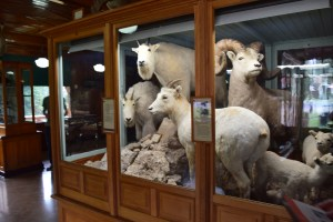 banff national park, banff historical museum, natural history, canada national parks, alberta, tourists